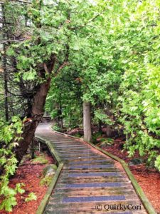 Flower Pot Island, Trail, Boardwalk