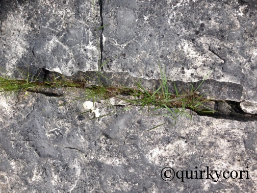 Crevice, Grass, Bruce Peninsula National Park