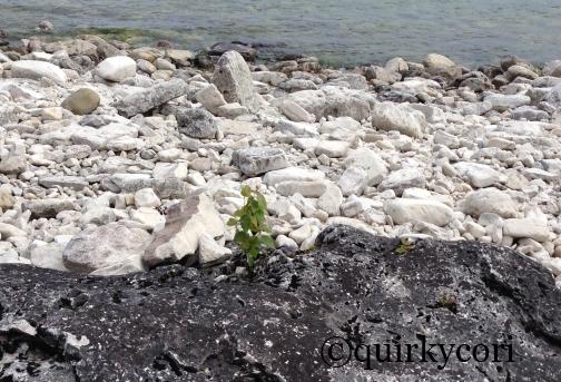 , Perseverance, green plant, Bruce Peninsula
