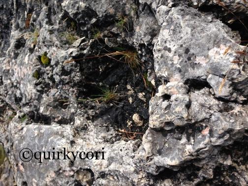 Grasses, Bruce Peninsula, Perseverance