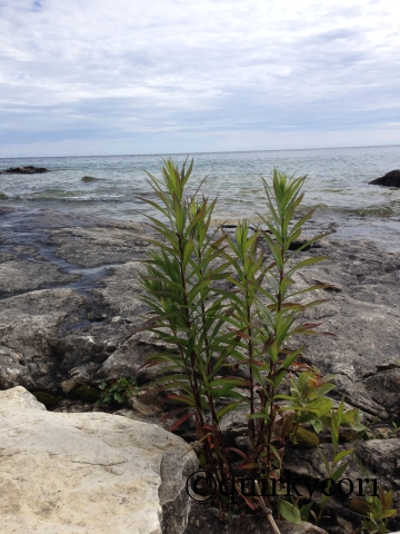 Green plants, Bruce Peninsula National Park, Perseverance